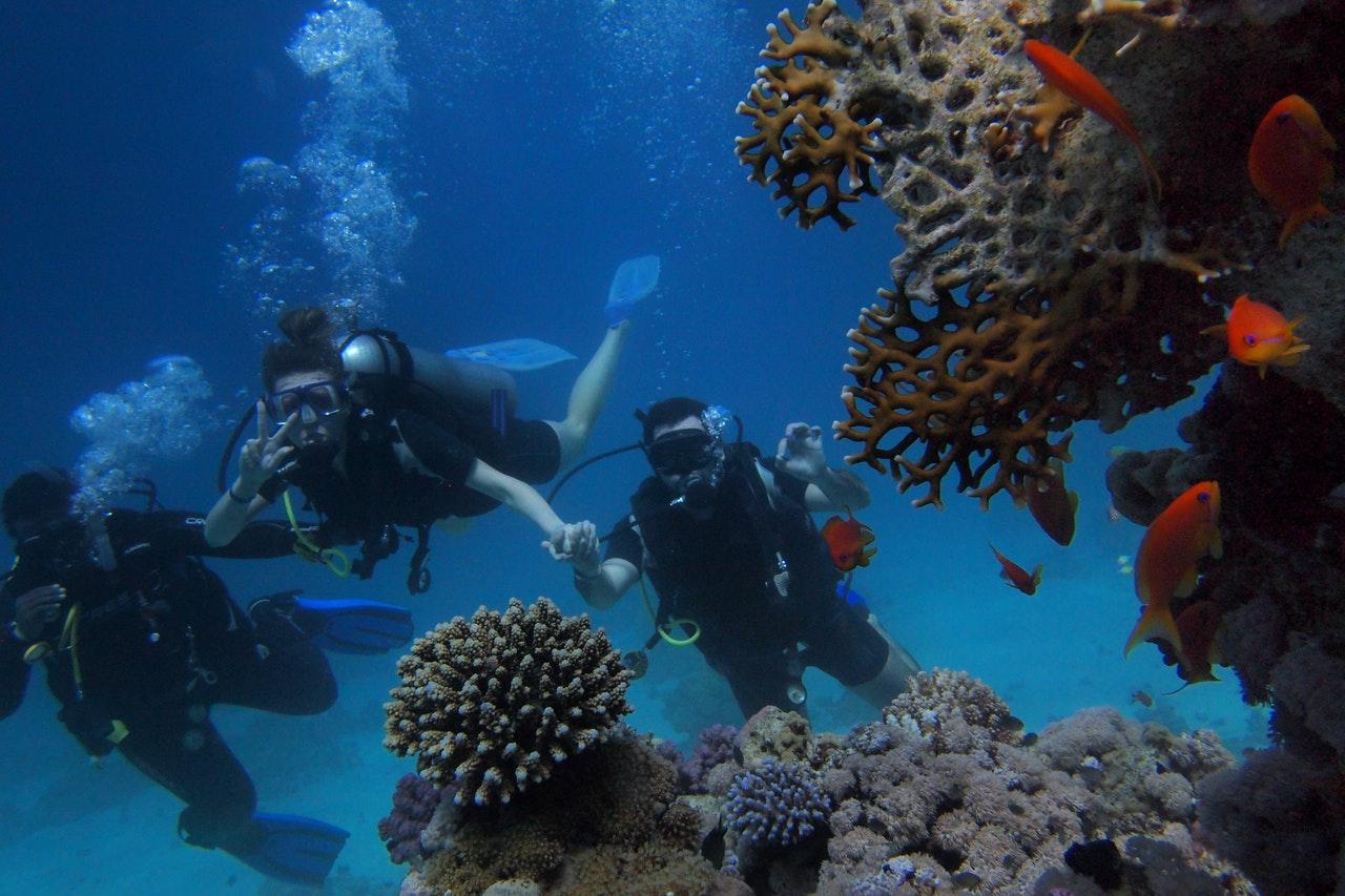 Tre personer dykker ved koralrev